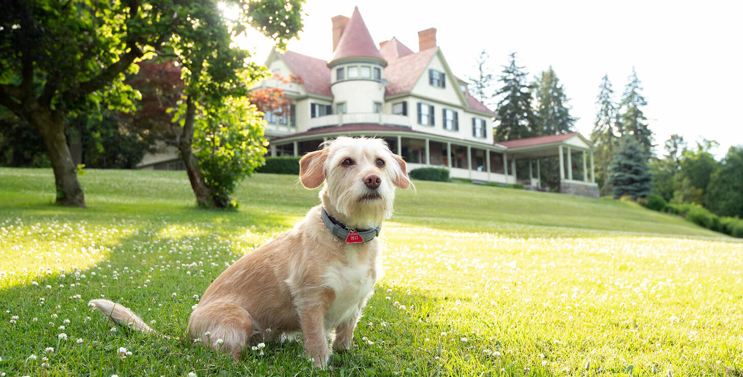 Watkins Glen dog friendly hotel - Stella the dog in the grass in front of the inn
