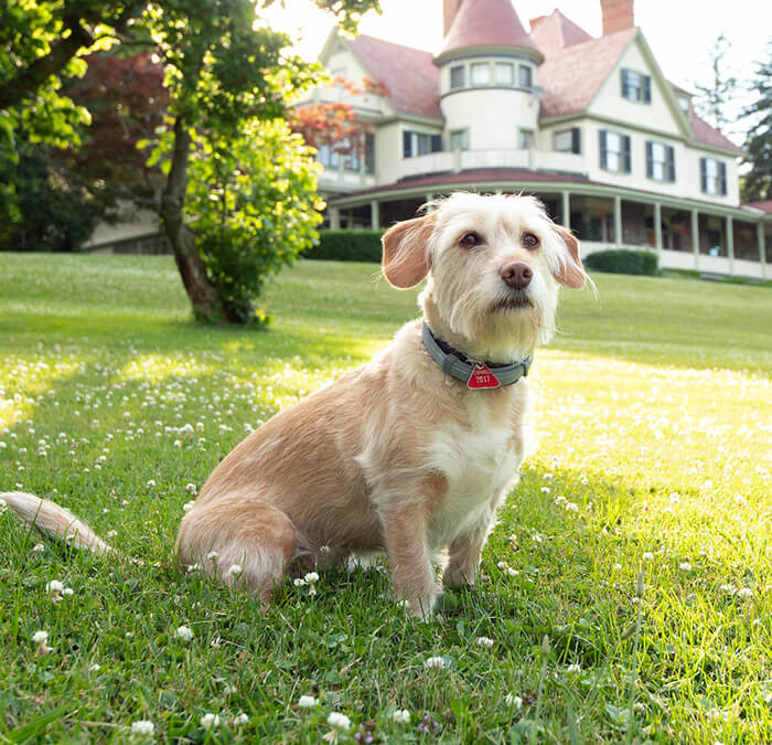 Pet Friendly Inn - Stella the dog