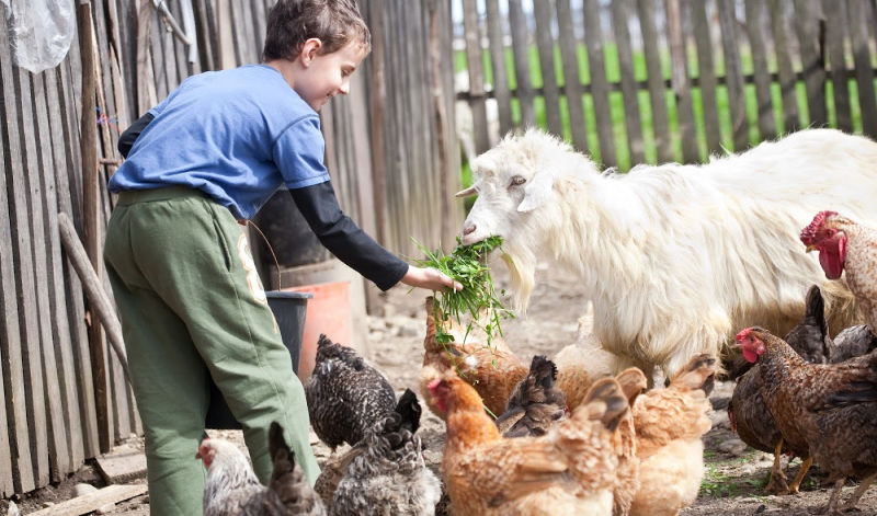 a young boy feeding various farm animals