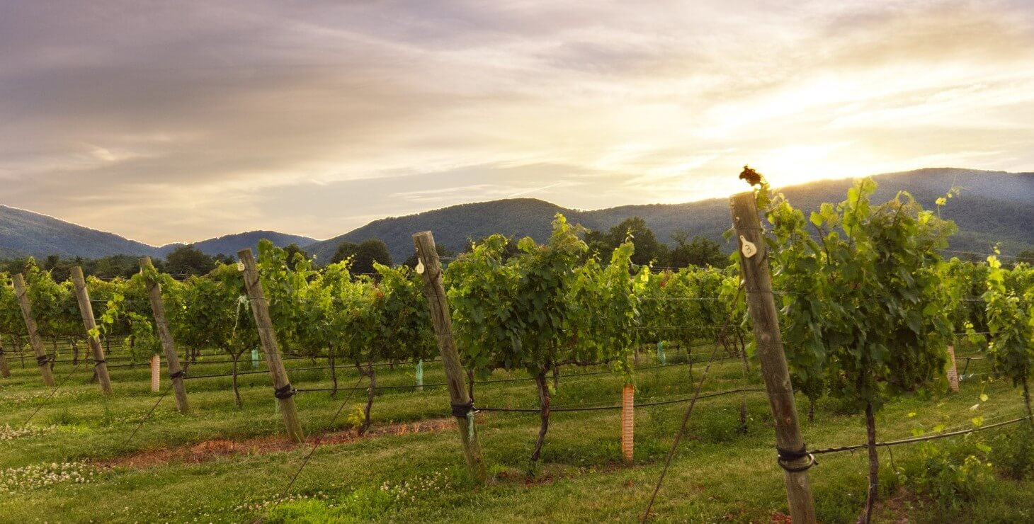 Winery at Sunset, Vineyard View in the Finger Lakes NY.