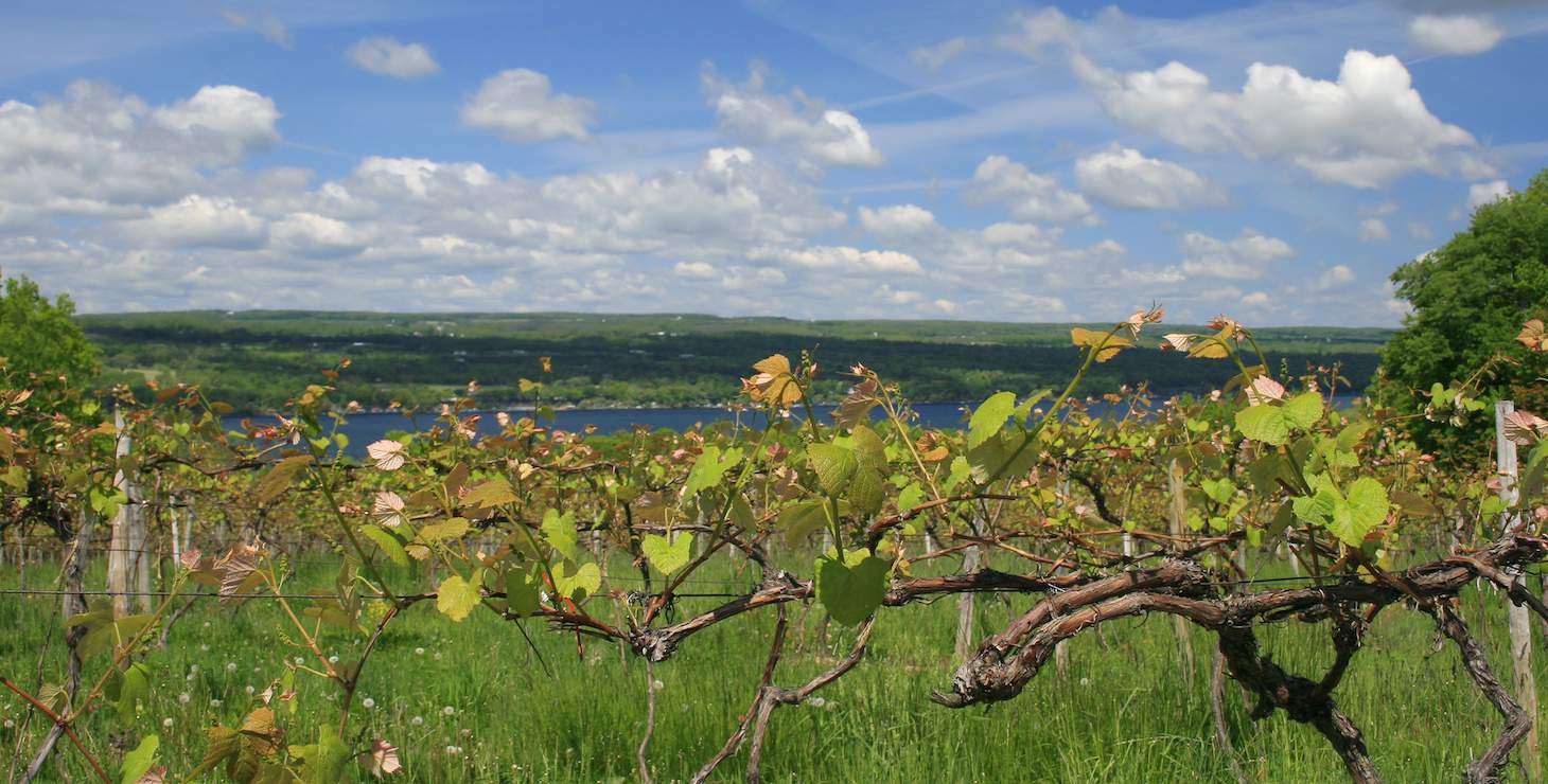 2021 Winery Guide to the Finger Lakes